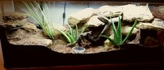 Built by Gary Leverton for a leopard gecko. Reptile House, Reptile Room, Reptile Cage, Leopard Gecko Habitat, Lizard Habitat, Leopard Geckos, Leopard Gecko Terrarium, Reptile Terrarium, Tarantula Enclosure