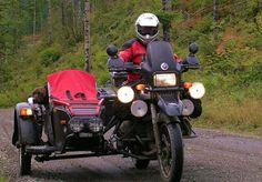 MOTORCYCLE 74: Bmw sidecar dog