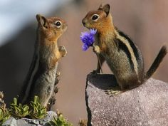 This chipmunk that remembered to bring flowers.