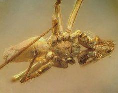 Hổ phách có nguồn gốc từ nhựa cây, trải qua hàng ngàn năm biến đổi thành dạng copal, rồi lại tiếp tục hàng ngàn năm nữa mới trở thành hổ phách thực thụ.