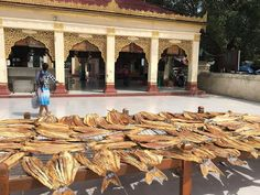 Bagan, Myanmar. Fish drying in the courtyard of a temple. THE ISLAND GIRL by…