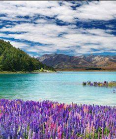 Lake Tekapo , New Zeland, from Iryna
