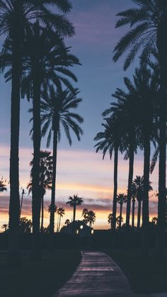 Evening with palm trees. evening with palm trees summer wallpaper phone, iphone wallpaper travel Phone Backgrounds, Wallpaper Backgrounds, Iphone Wallpaper, Summer Wallpaper, Tree Wallpaper, Nature Wallpaper, Beautiful Wallpaper, Print Wallpaper, Pretty Pictures
