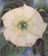 Georgia O'Keeffe One Hundred Flowers Nicholas Callaway Alfed A Knopf 1989 1st PC