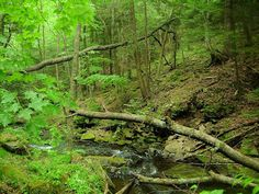 I'd love to be here...oh, wait, I can! It's in my state! Worlds End State Park, Forksville, Pennsylvania