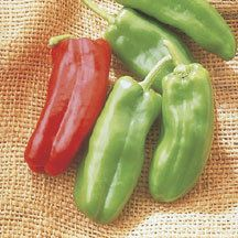 Plants - AAS 2001 Winner Giant Marconi Hybrid Pepper Plants - buy at Jung Garden and Flower Seed Company