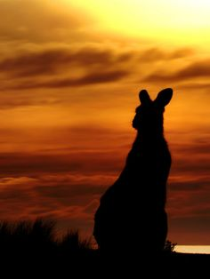 Kangaroo Sunset