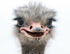 Ostrich @Allison Bogart