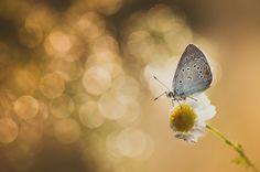 _DSC0490.jpg by Saleh Sweid on 500px