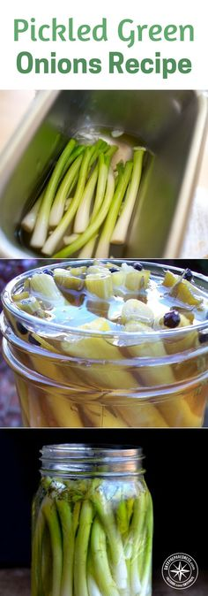 Pickled Green Onions Recipe - Growing green onions is great for many reasons. Store bought green onions have been linked to E.coli contamination and that always makes you feel better about what you are growing. #pickledgreenonions #pickling #canning