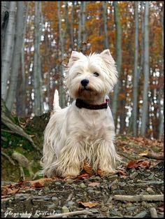 .Love that look...just searching the woods Mom, make sure it is safe for you...