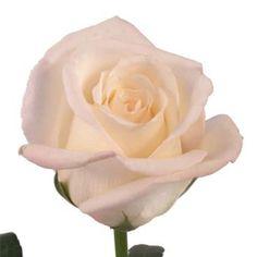 Virginia Rose...my favorite!