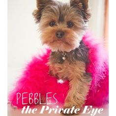 I love this because the dog's name is Pebbles (obv) and because I will forever dream about having a little dog to accompany my giants. <3