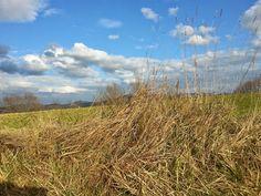 Campagna umbra dalle parti di Gubbio, in lontananza i monti della catena dei Sibillini con le cime innevate.