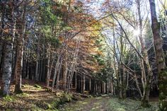 AUTUMNAL foliage IN THE FOREST