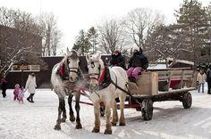 Wagon rides at Winterfest in YMCA of Simcoe/Muskoka's Geneva Park