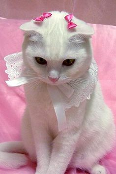 See More Beautiful Cat Costumes? -It's all about loving your pet and giving them amazing look that we find ourselves fall in love with them. Pretty Cats, Beautiful Cats, Animals Beautiful, Cute Animals, Pretty Kitty, I Love Cats, Crazy Cats, Cool Cats, Image Chat