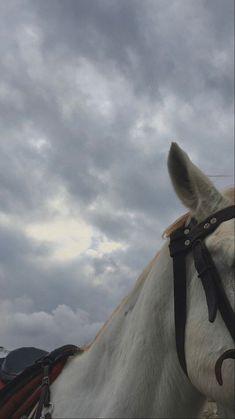 Beautiful Nature Scenes, Beautiful Horses, Animals Beautiful, Cute Animals, Cute Horses, Horse Love, Horse Girl Photography, Nature Photography, Sky Aesthetic