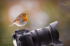 the photographer by fotissima via http://ift.tt/1Rybkyi
