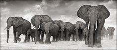 """ELEPHANTS RESTING, AMBOSELI 2007"" by Nick Brandt (Amazing Wildlife Photographer)"