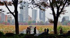 Tokyo - November in 30 pictures