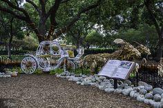 Pumpkins, Halloween, Fall, Dallas Arboretum, Texas, Princess, Carriage, Cinderella Princess Carriage, Pumpkin Carriage, Dallas Arboretum, Pumpkins, Garden Sculpture, Art Photography, Cinderella, Texas, Party Ideas