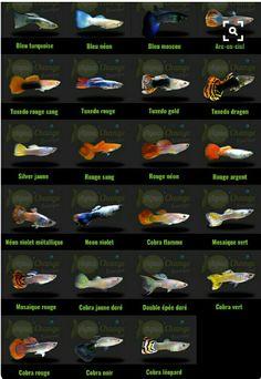 Farklı tür balıklar
