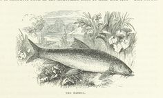 Image from 'The book of the Thames', 001571487 Author: Hall, S. C. (Samuel Carter)   Page: 295   Year: 1859   Place: London   Pu...