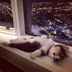 He loved the view so much that he passed out - Funny puppies sleeping in weird positions.