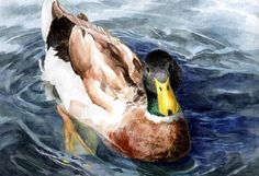 Image result for watercolor duck