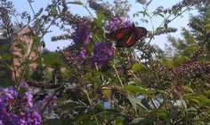 Butterflies in the city #nature #photos