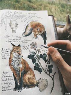 Рисунок лисицы на книге.