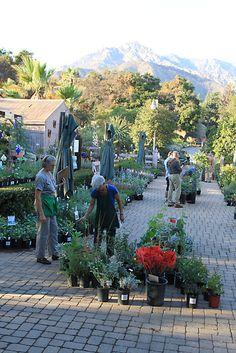 2009 - Annual Fall Plant Sale at the Santa Barbara Botanic Garden www.sbbg.org  Santa Barbara Botanic Garden Image Library