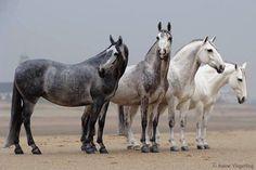 Four shades of grey