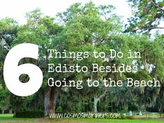 6 Things to Do in Edisto, South Carolina Besides Going to the Beach