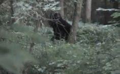 July 19,2011, the Iowa Bigfoot