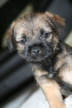 This is our new puppy 'ted'