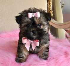 Okay I admit it.....there is a part of me that would so LOVE this dog!!! Even have a bag to carry it in!!!   TINY SHORKIE