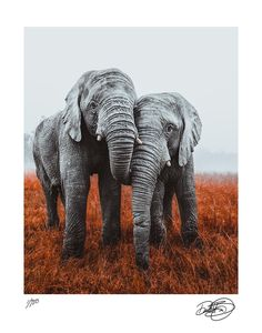 681f7a082b6 Decorate with Art. Not Ivory. Donate to IFAW. Save The Elephants
