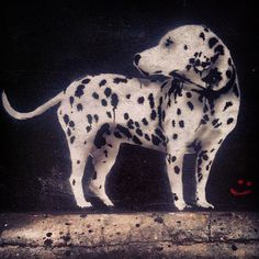 On wall #Padgram Panther, The Neighbourhood, Wall, Dogs, Animals, The Neighborhood, Animales, Animaux, Panthers