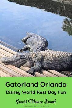 Gatorland Orlando: Perfect Disney World Rest Day Activity - Smart Mouse Travel Gatorland Orlando, Orlando Travel, Disney World Florida, Off Road Adventure, Rest Days, Small Ponds, Close Encounters, Universal Orlando, Stunts