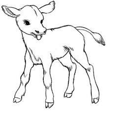 Cow Just Born Baby Coloring Page