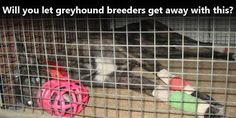 Will you let greyhound breeders get away with this?