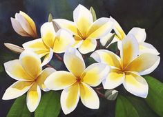 Visit the working studio of artist, Kathleen Alexander. Watercolor workshops and private lessons are available. Watercolor Flowers, Watercolor Art, Watercolour Paintings, Painting Flowers, Watercolours, Plumeria Flowers, Art Studios, Flower Art, Inspiring Art