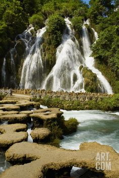 -Rain forest. China