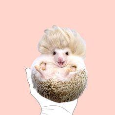 """Qui vote pour que ce petit hérisson hyper mignon devienne la mascotte du mouvement """"body positive"""" ? . 𝗜𝗹 𝘀'𝗮𝘀𝘀𝘂𝗺𝗲 𝗽𝗹𝗲𝗶𝗻𝗲𝗺𝗲𝗻𝘁, 𝗹𝘂𝗶, 𝗲𝘁 𝗶𝗹 𝗮 𝗹'𝗮𝗶𝗿 𝗱𝗲 𝗯𝗲𝗮𝘂𝗰𝗼𝘂𝗽 𝘀'𝗮𝗶𝗺𝗲𝗿 ! 😀  BOOBOX™  🎁 Yˢoͧuͬrᵖsͬeͥlˢfͤ. boobox.co Body, Animals, Literary Genre, Bite Size, Animales, Animaux, Animal, Animais"""