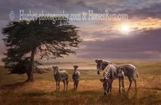 The Mane Event features a family of Grevy zebras from Kenya. They are an endangered species. They can be seen at Point Arena, CA at the B. Mane Event, Realism Art, Endangered Species, Zebras, Animal Photography, Saatchi Art, Canvas Art, Fantasy, Wall Art