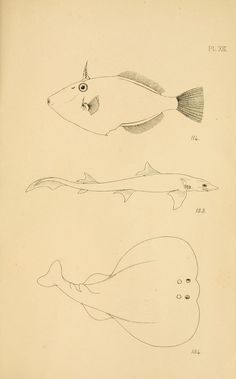 Images from books in BHL that you can download and color yourself! Learn more about the #ColorOurCollections event, led by The New York Academy of Medicine, Feb. 1-5, 2016: biodiversitylibrary.org/collection/ColorOurCollections