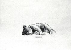Animal - Bear - Baby bear drawing 014