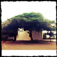 Barranco solitario. #barranco #perú #lima #arbol #solitario